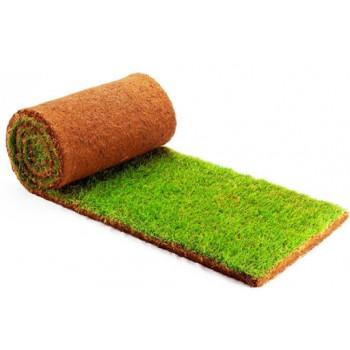 Виды газонов, как выбрать место и подготовить почву