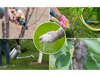 Как ухаживать за садом круглый год