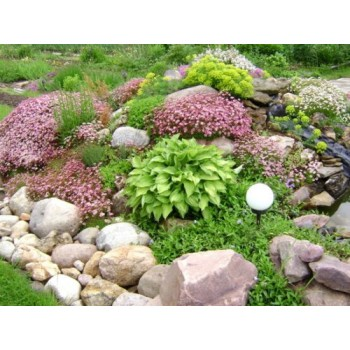 5 оригинальных идей как украсить ваш сад (фотоидеи)