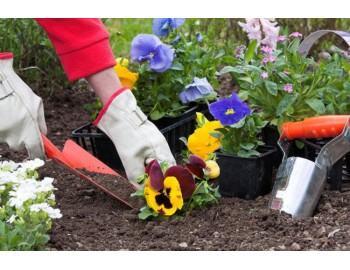 8 бюджетных советов которые помогут вам в саду
