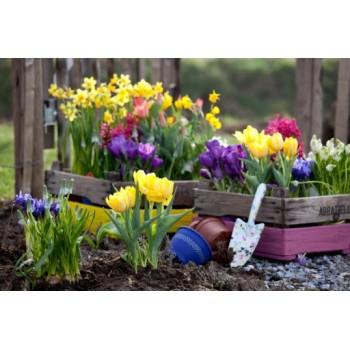 Работы цветовода в апреле